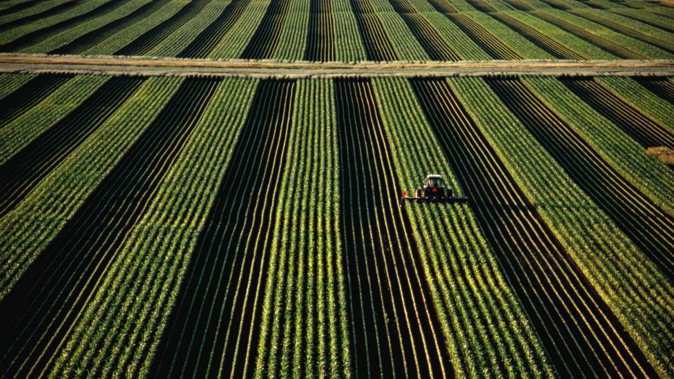 Soybean yields will eventually decline in the US, even if farms change location (Credit: Getty Images)