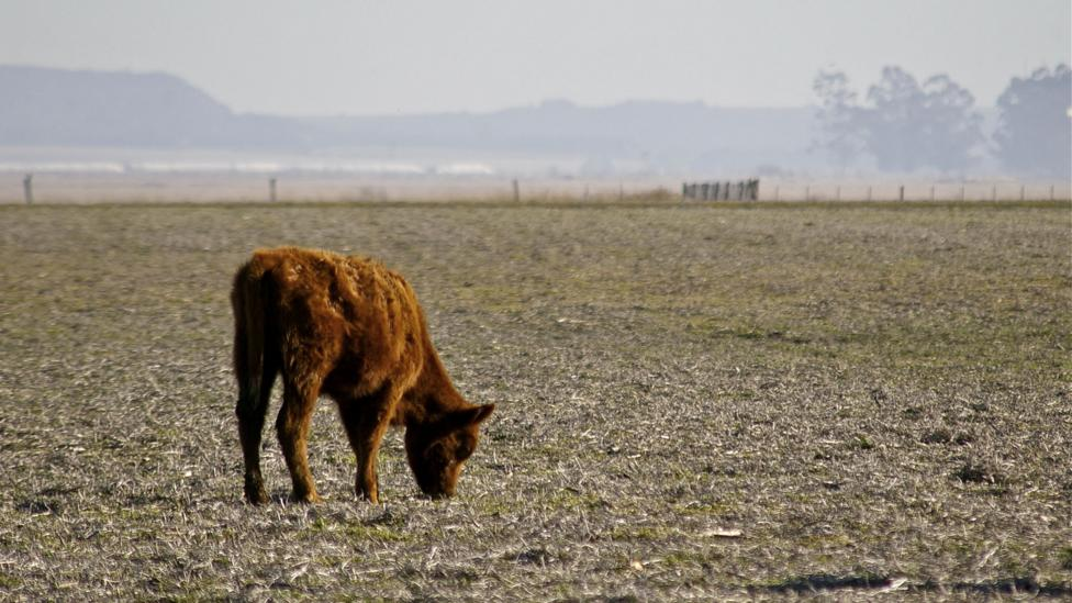 About 4% of the world's croplands experience drought in any given year, but by the end of the century this figure is projected to jump to about 18% per year (Credit: Thinkstock)