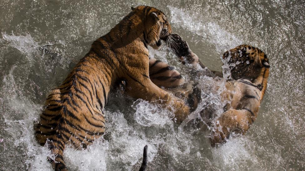 Human strength is puny compared with many creatures (Credit: iStock)
