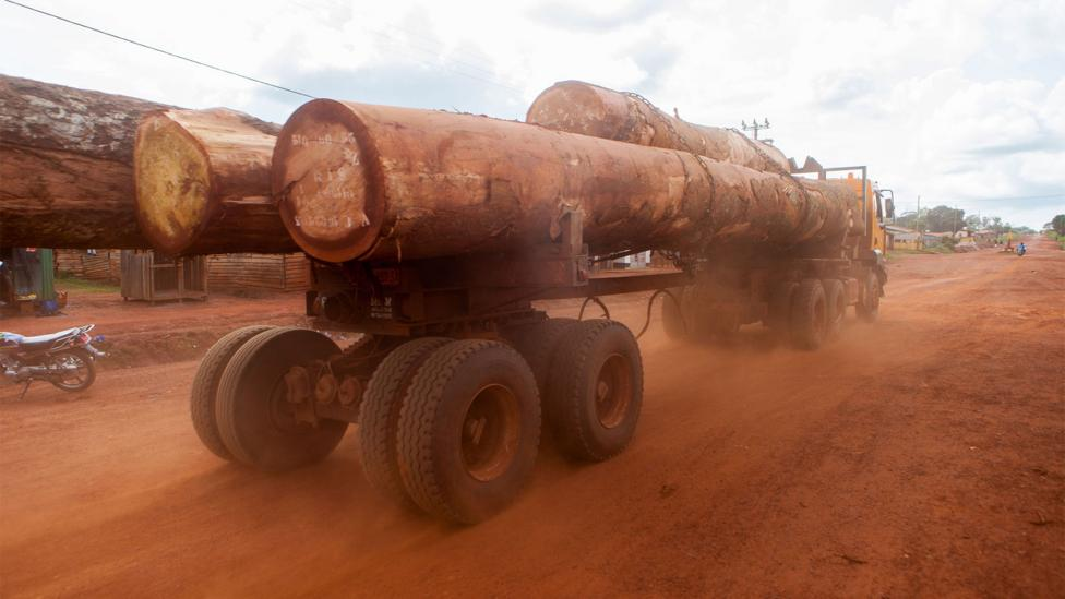 China has invested vast sums of money in Cameroon's infrastructure so that it can extract the country's natural resources, including timber (Credit: Alamy)