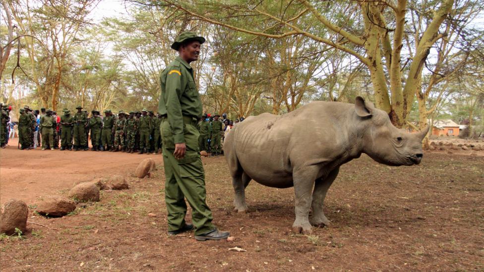 On World Rhino Day people gathered at Lewa Wildlife Conservancy. (Credit: Rachel Nuwer)