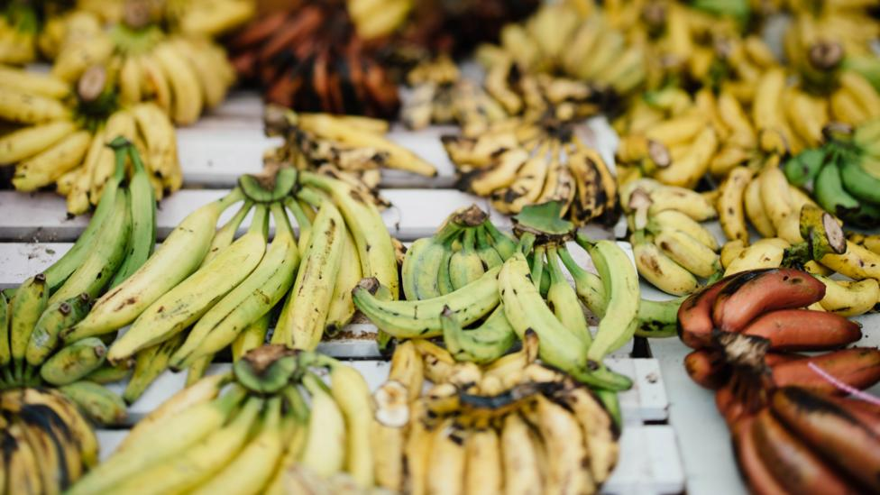 Plantain, a variety of banana fruit