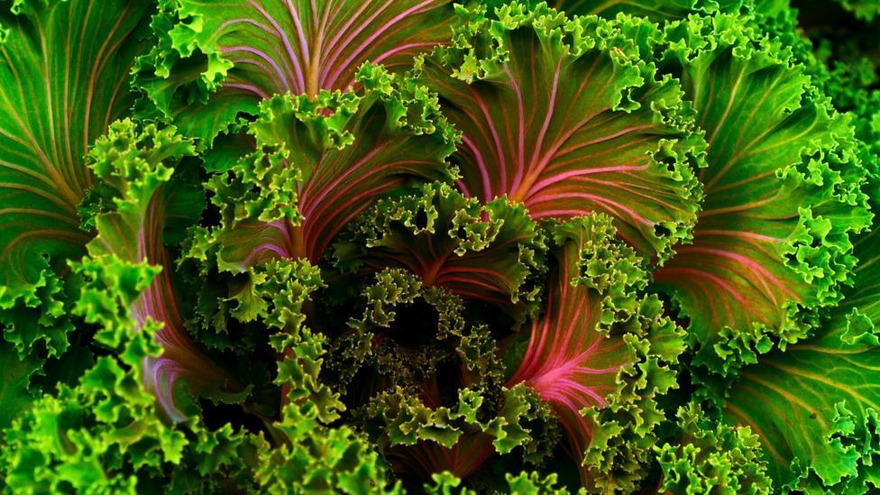 Kale - an excellent side dish