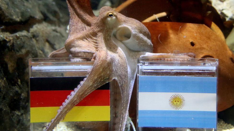 Paul the octopus was one of the more successful animal psychics when it came to predicting the outcome of World Cup matches (Credit: Getty Images)