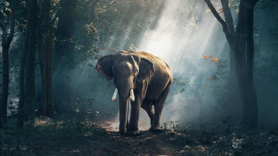 If a powerful deity could give an elephant a soul, wondered Alan Turing, then why not AI? (Credit: Getty Images)
