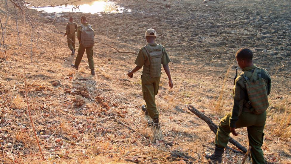 On an unusually quiet morning, the rangers investigate a water hole for elephants (Credit: Rachel Nuwer)