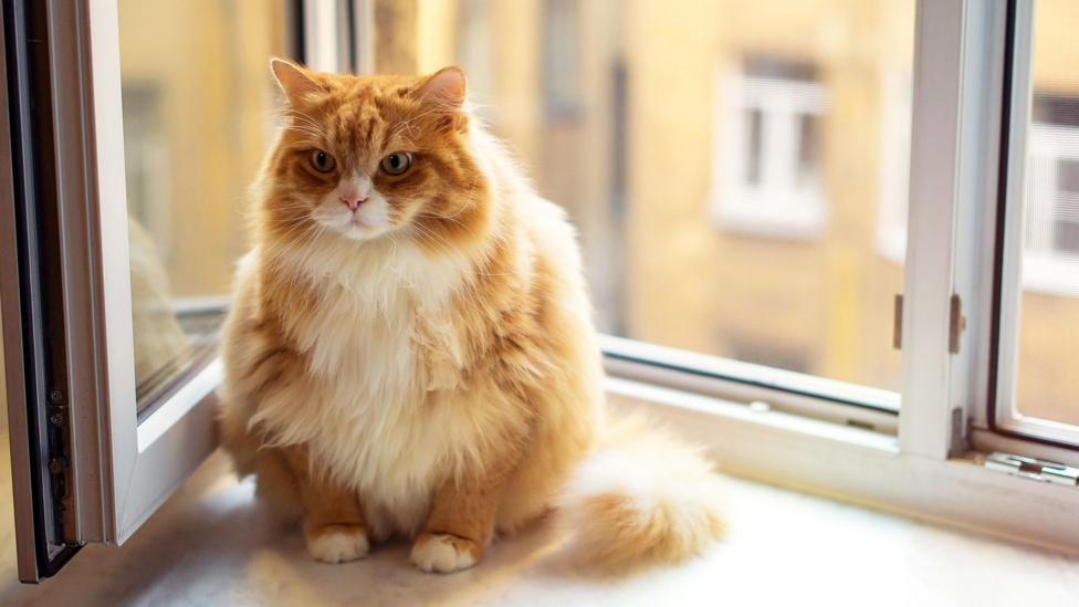 Overweight animals could help us understand human obesity (Credit: Getty)