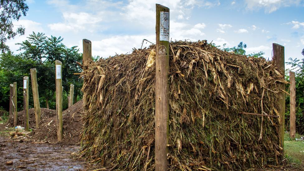 Unlike a mineral fertiliser, compost can restore the soil structure by adding organic matter (Credit: Sibylle Grunze)