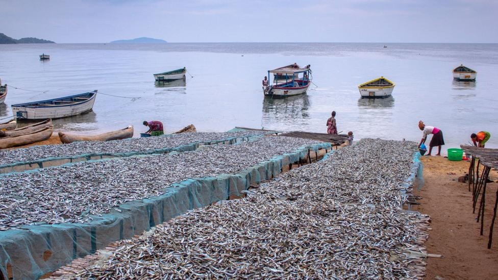 Runoff from fisheries could be another source of phosphorus (Credit: Sibylle Grunze)