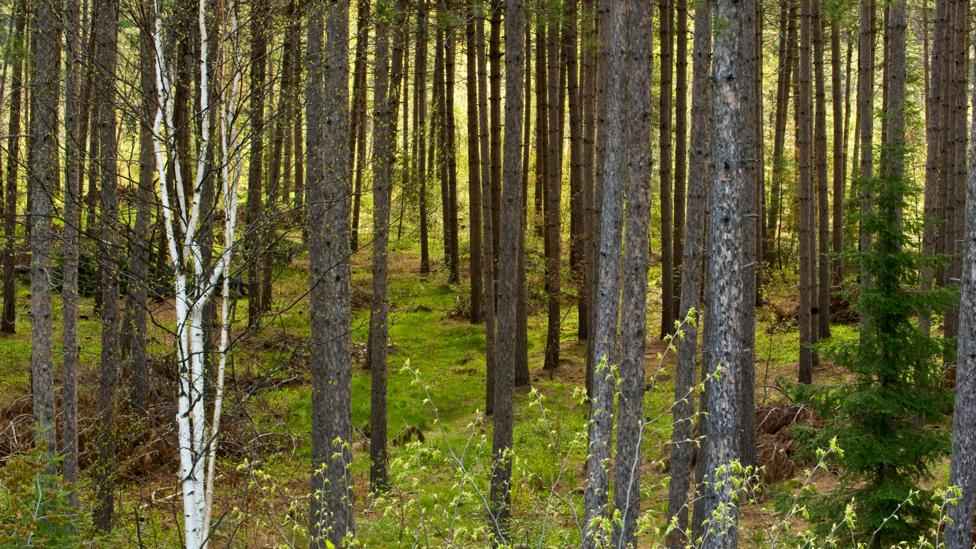 While young trees absorb carbon dioxide, older plants emit more than they take in (Credit: Alamy)