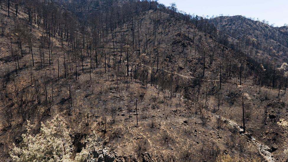 Unmanaged woodlands are at greater risk of forest fires (Credit: Alamy)