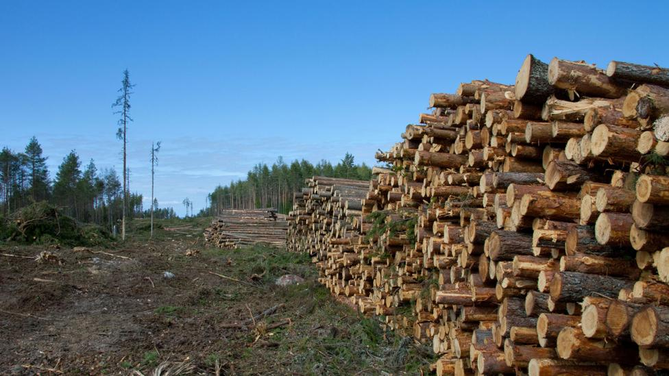 A cubic metre of wood contains around a tonne of CO2 – which is similar to 350 litres of gasoline (Credit: Alamy)