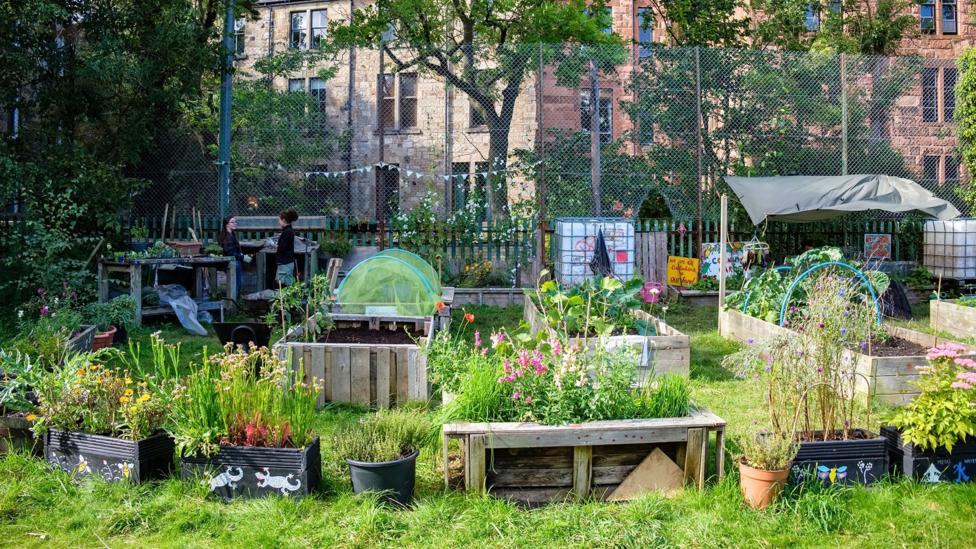 Raised beds in Children's Wood, Glasgow.