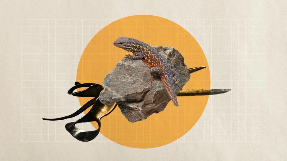 A lizard playing Rock-Paper-Scissors (Credit: Getty Images/ Alamy/ Javier Hirschfeld)