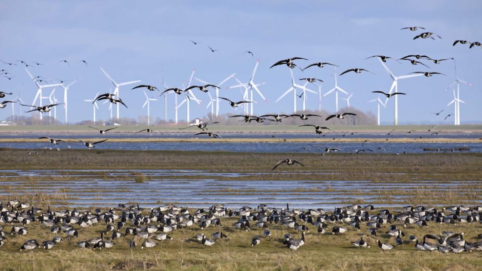 The best way to stop wildlife deaths from turbines is to build windfarms out of common nesting and migration areas (Credit: Getty Images)