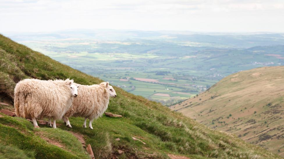 Areas that are now used for farming – such as rearing sheep on hill country – can be difficult to reforest  (Credit: Getty Images)