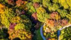 Aerial view of coloured treetops in The Acre Glade within The Garden House in Buckland Monachorum, Devon